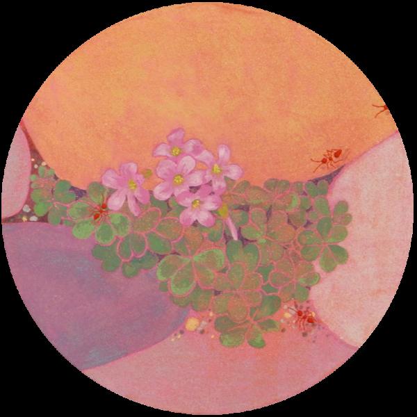 ピンクのカタバミ